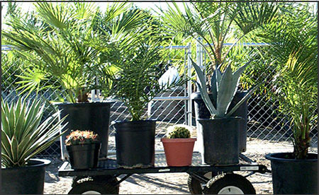 Garcias Palms Assortment